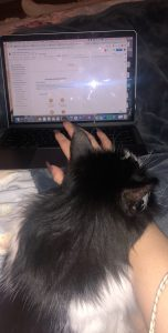 Photo of Brown's cat lying by her laptop.